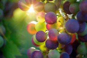 選び方手順②うま味が多く感じられるブドウ品種から選ぶ