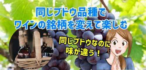 同じブドウ品種でワインの銘柄を変えて楽しむ