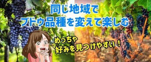 同じ地域でブドウ品種を変えて楽しむ